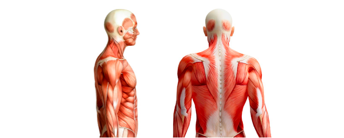 8 Exercises To Improve Your Scapula Stability And Shoulder